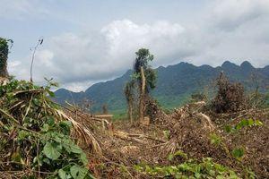 Rừng Quảng Bình liên tục 'chảy máu' dù nằm cạnh trạm kiểm lâm