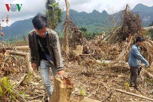Khởi tố vụ án hình sự hơn 2 ha rừng tự nhiên bị phá ở Quảng Bình