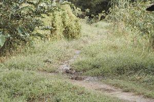 Bắt khẩn cấp đối tượng 'yêu râu xanh' hãm hiếp thiếu nữ ở cánh đồng vắng