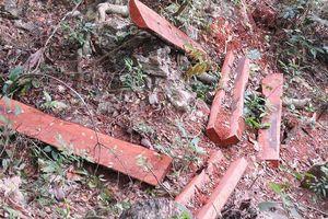 Khởi tố vụ phá rừng gỗ mun ở Phong Nha – Kẻ Bàng