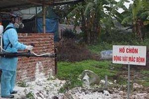 Hà Nội: Chuyển hướng chăn nuôi lợn an toàn sinh học