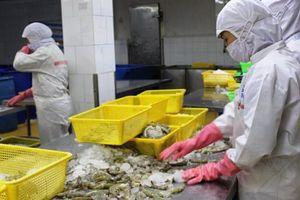 Hoa Kỳ công bố thuế chống bán phá giá 0% cho tôm Việt