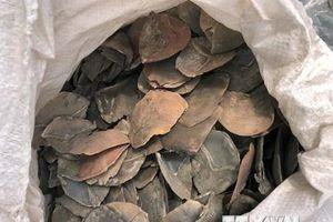 Singapore tịch thu 13 tấn vẩy tê tê vận chuyển bằng đường biển