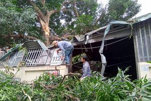 Cây xanh đổ sập vào quán ăn trên phố Chùa Láng, nhiều người hoảng sợ