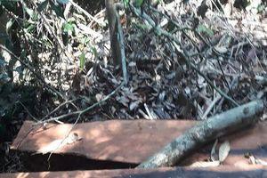 Quảng Bình: Khởi tố vụ phá rừng gỗ quý tại VQG Phong Nha – Kẻ Bàng