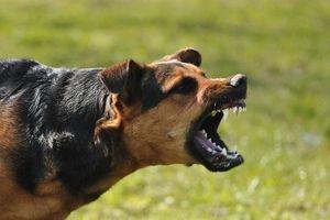 Chó thả rông lao vào trường cắn 6 học sinh tiểu học bị thương