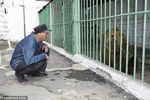 Gấu nâu tấn công người bị kết án tù chung thân
