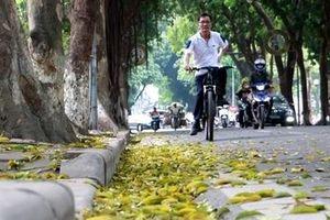 Hà Nội đẹp nao lòng mùa lá rụng