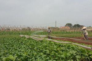 'Ăn nên làm ra' nhờ sản xuất rau giống