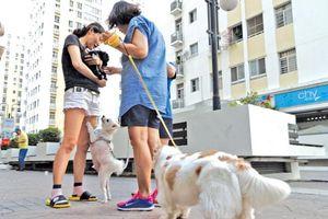 Tranh cãi chuyện nuôi chó mèo ở chung cư: To như becgie nhưng... 'nó không cắn đâu!'