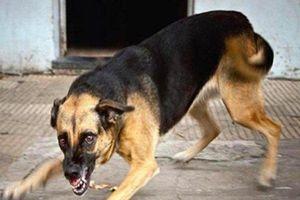 Chó điên lao vào cắn bé gái 5 tuổi và 4 người lớn rồi lăn ra chết
