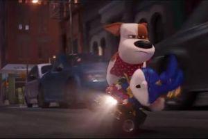 'Đẳng cấp thú cưng 2' tung trailer hé lộ những màn siêu quậy