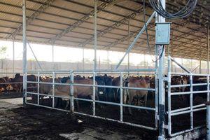 Phân bò hôi thối, tiếng ồn quá tải, bụi bặm ô nhiễm: Người dân đang sống trong đau khổ mà kêu không thấu