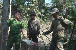 Bắt quả tang 4 kẻ ngang nhiên 'xẻ thịt' gỗ rừng ở Đắk Lắk