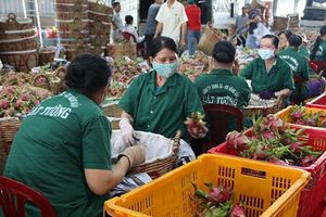 Giải pháp đưa xuất khẩu quả - rau trở lại quỹ đạo tăng trưởng