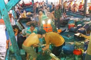 Kịp thời cứu tàu cá cùng 51 ngư dân
