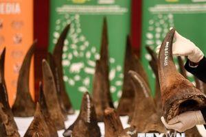 Nam Phi ngăn chặn số lượng lớn sừng tê giác tiêu thụ tại Đông Nam Á