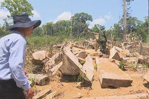 Đắk Lắk: Lâm tặc ngang nhiên phá rừng