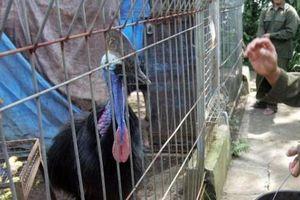 Mỹ: Chim nguy hiểm nhất thế giới dùng móng sắc như dao giết chết chủ