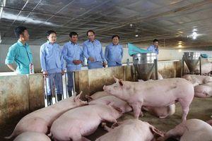 Trang trại chăn nuôi lớn khó bị các loại dịch bệnh xâm nhiễm
