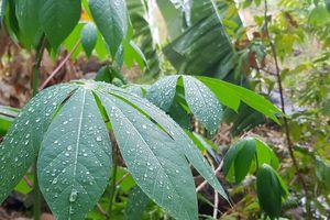 Mưa sẽ tăng dần từ ngày 16/4 giúp bớt nắng nóng cho TP.HCM, Bình Dương...