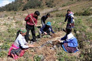 Hiệu quả thực hiện Chương trình mục tiêu quốc gia giảm nghèo bền vững tại Lai Châu