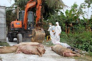 Xử lý những hộ dân tự giết mổ thịt lợn chưa qua kiểm dịch
