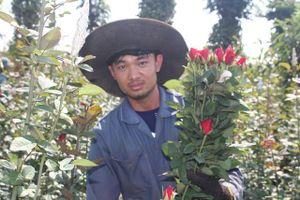 Gia Lai: Thanh niên 9X trồng hoa hồng xứ Bắc trên phố núi, thu hàng trăm triệu đồng mỗi năm