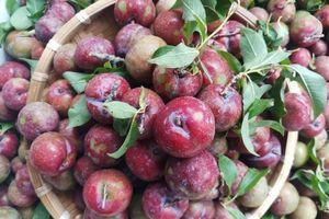 Mơ chua mận chát đầu mùa, giá cao gấp 2-3 lần trái cây nhập khẩu vẫn 'hút khách'