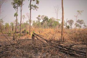 Hơn 4 ha rừng sản xuất và rừng phòng hộ bị chặt phá, đốt trụi