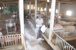 Địa phương đầu tiên ở Nghệ An công bố hết dịch tả lợn châu Phi