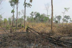 Gia Lai: Phát hiện hơn 4ha rừng bị chặt phá trái phép