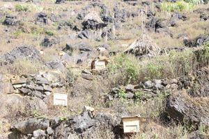 Nghề nuôi ong trên cao nguyên đá Hà Giang