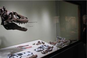 Tá hỏa vì hóa thạch khủng long T-Rex rao bán trên eBay gần 3 triệu USD