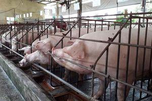 Ứng dụng công nghệ blockchain trong chăn nuôi
