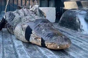 Ông lão 80 tuổi một mình vật lộn, khống chế cá sấu dữ