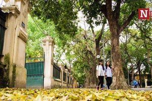 Ngẩn ngơ ngắm Hà Nội mùa sấu thay lá, nhuộm vàng con phố lãng mạn nhất Thủ đô