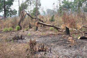 Gia Lai: Phát hiện hơn 4ha rừng bị 'chặt phá, đốt trụi'