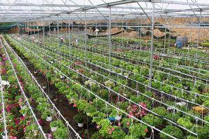 Phát triển nông nghiệp Việt Nam thích ứng với BĐKH