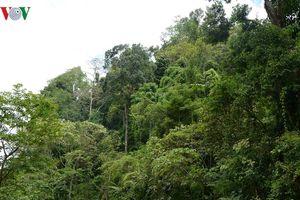 Xác minh thông tin phá rừng tại Chiềng Khừa, Mộc Châu