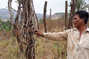 Huyện Chư Pưh, tỉnh Gia Lai: Người dân lao đao vì 'vàng đen'