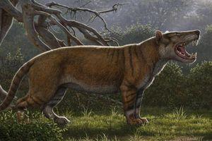 Tìm thấy hóa thạch sư tử khổng lồ 20 triệu năm