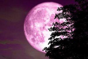 Hôm nay (19/4), hiện tượng trăng hồng độc đáo sẽ xuất hiện
