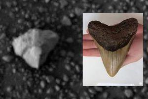 Tìm thấy vật thể lạ nghi răng hóa thạch trên sao Hỏa
