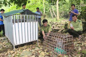 Cao Bằng: Thả 2 cá thể khỉ về với rừng tự nhiên
