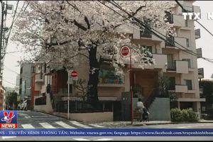 Nhật Bản ra mắt trang thông tin du lịch bằng tiếng Việt