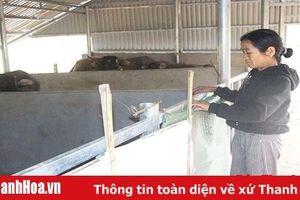 Mô hình chuồng trại nuôi nhốt gia súc tập trung ở xã Quang Hiến