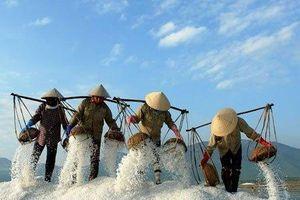 Hãy khôi phục ngay các cánh đồng muối phơi cát ở miền Bắc Việt Nam