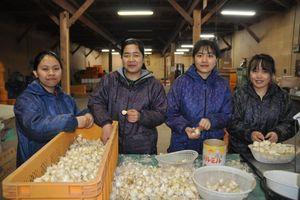 Sang Nhật làm nông nghiệp 'rộng cửa' cho tu nghiệp sinh Việt Nam