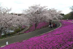 Sáng Hàn Quốc, chiều Nhật Bản: Một ngày 2 nước, thỏa lòng phiêu bạt